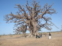 Superbe baobab