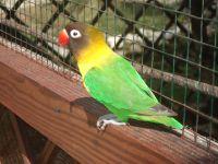 Un  habitant du parc aux perroquets