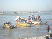 L'arrivée des pêcheurs en pirogue.