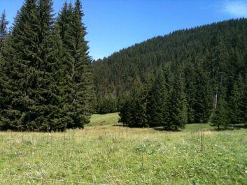 forêt et alpage naturel  à Morillon