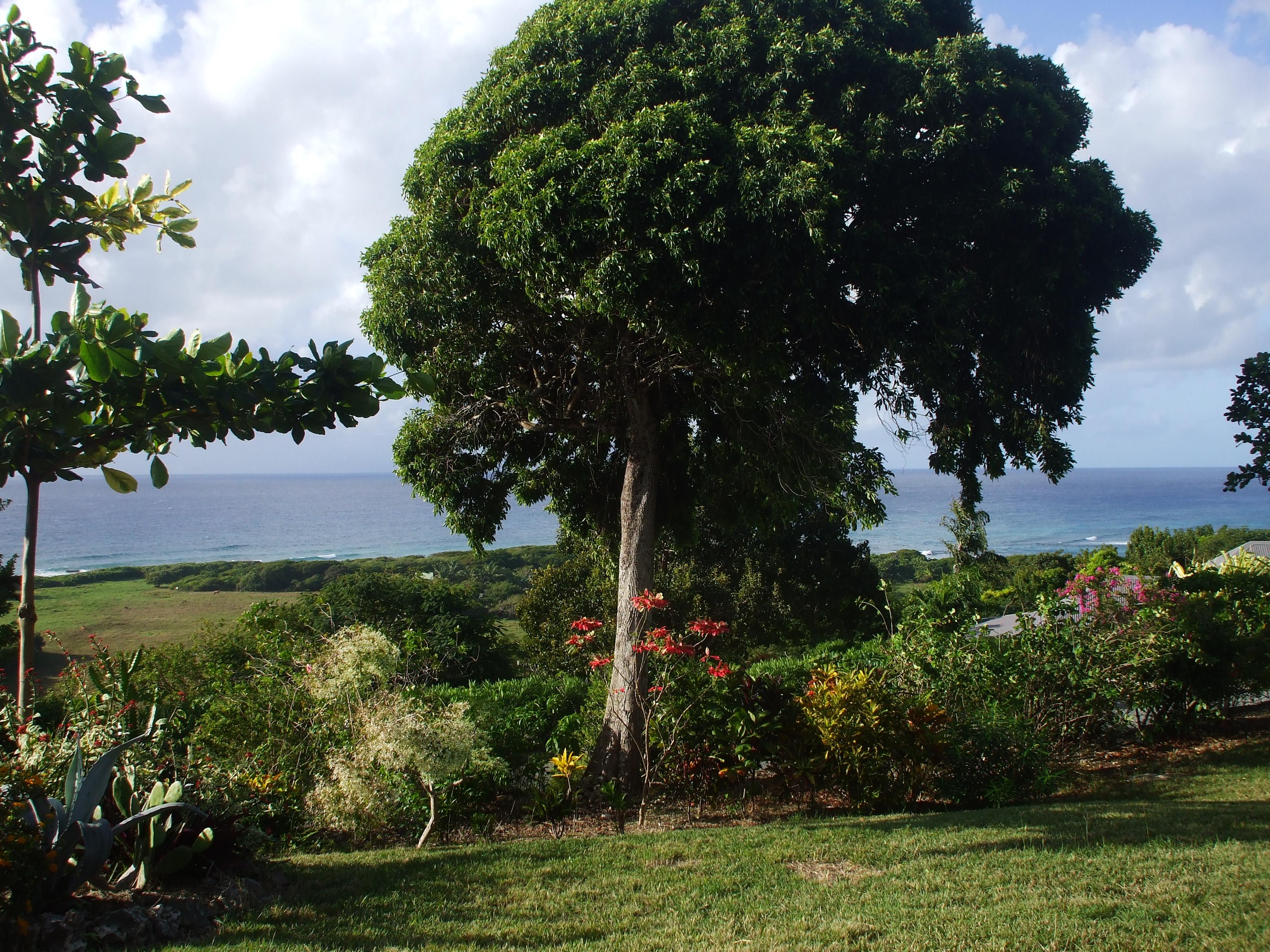le jardin face à la mer