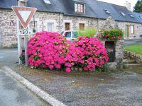 hortensias et fontaine sur le parking devant la maison