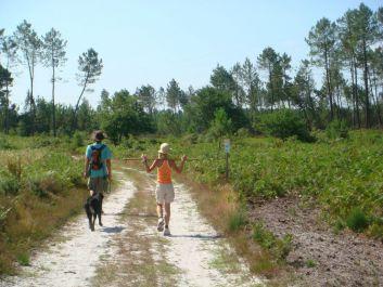 Balades ou jogging au choix : la forêt est à 20 m de l'appart