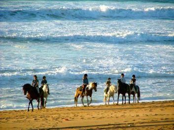 La plage à cheval pour grands ou petits, haras à 600 m