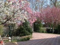 arbres en fleurs au printemps