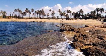 plage aux palmiers