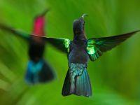 Colibris Madère au jardin des colibris
